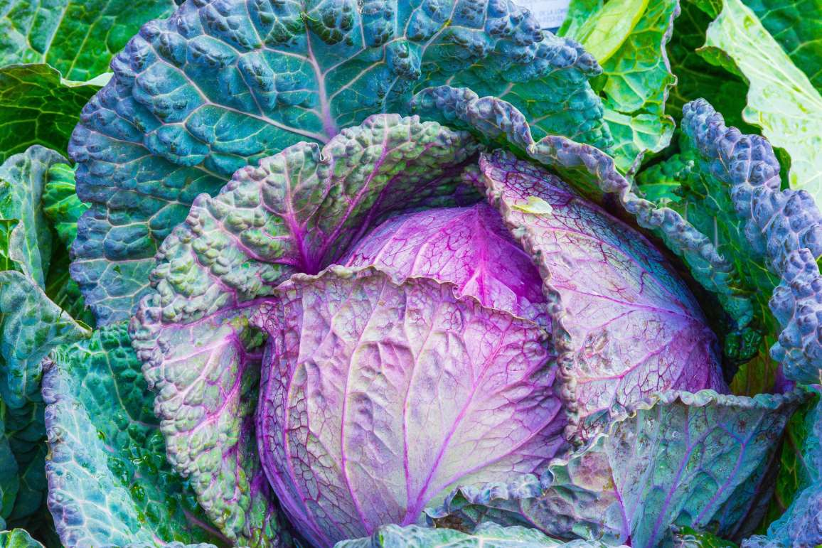 These Cabbage Benefits Are Perfect For Weight Loss